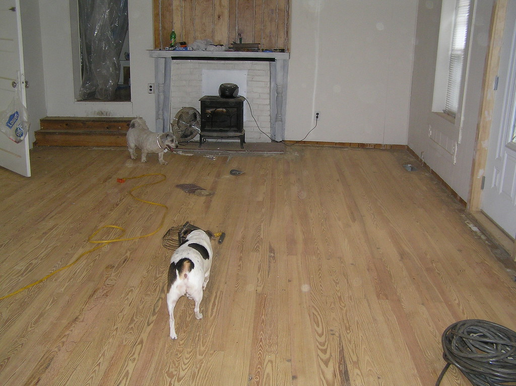 Alfie and Bella checking out the sanded floor in the great room