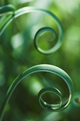 Golden spirals (fd) Tags: macro green grass catchycolors spiral curves curvy themecompetition goldenratio goldenspiral catchycolorsgreen tccomp025