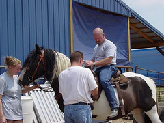 Richard on the Gypsy Vanner mare (Saveena (AKA LHDugger)) Tags: horse woman man male nature animal fauna female ilovenature mare all no steve danielle lisa any h rights richard form piebald written gypsy ungulate without usage reserved equine equus allowed vanner consent equidae equuscaballus dugger quadruped herbivorous gypsyvanner  saveena