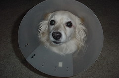 More dog in a cone