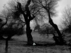Winter's Hope (Tonym1) Tags: infrared tree nature photoshop composite flower nikon5700 mc03creative