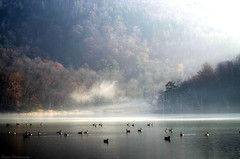 Postcard to my flickr friends (Captions by Nica... (Fieger Photography)) Tags: water wildlife weather landscape lake light forest fall fog foggy mist misty mountains mountain geese bird flockofbirds flock nature serene autumn reflections trees tree branches outdoor