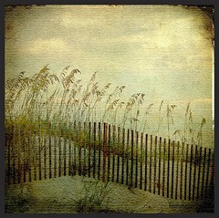 ANOTHER SOUTHERN BREEZE (kluthphotos) Tags: skeletalmess kluthphotos shadowhousecreations whitesandybeach whitesand white water texture textures skeletalmesstextures sky shoreline seaoats sand orangebeachal nature gulfofmexico gulf beach selectbestfavorites selectbestexcellence sbfmasterpiece trolledproud dragondaggeraward dragondaggerphoto magicunicornverybest magicunicornmasterpiece