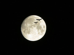Hawks on the Moon (dee_r) Tags: moon fullmoon birds top20moonshots tccomp042