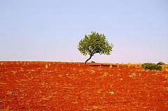 Alone and red... (Délirante bestiole [la poésie des goupils]) Tags: morocco maroc red tree rif latérite laterite wild rockery country landscape tag1 tag2 100asa culture sauvage primitive 11 tag11