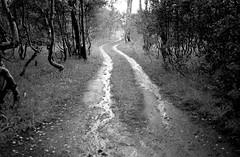 Road, Central Oregon (bentilden) Tags: road trees bw usa rain centraloregon fishlake