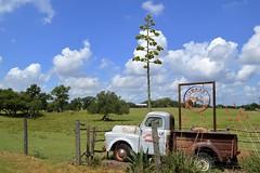 Truck & Century plant in Buda, Texas (Diann Bayes) Tags: clouds truck buda texas centuryplant ranch blue