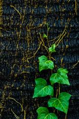 Humedad (Felipe Fernández-Rosas) Tags: lluvia rain winter invierno textura abstracto humidity humedad nature naturaleza tree