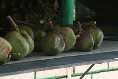 Cocos / Coconut (Esparta) Tags: mexico acapulco guerrero mexico:state=guerrero mexico:estado=guerrero mexico:state=gro mexico:estado=gro