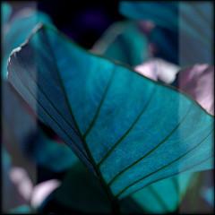 Kind of blue (Yorick...) Tags: blue strange garden dof bokeh yorick artlibre colorphotoaward isawyoufirst