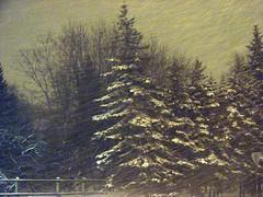 Tallinn: night, snowstorm,spruce (Marcus Vegas) Tags: winter snow night landscape geotagged tallinn wind action sony gray snowstorm snowfall spruce dsc h5 pirita challengeyou challengeyouwinner geo:tool=gmif geo:lat=59374829 geo:lon=24710451