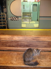 Transit Museum kitty