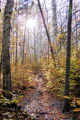Algonquin Autumn, Canada (Jeff L.2007 (Laverton Images)) Tags: autumn trees ontario canada fall nature leaves yellow forest landscape path cybershot algonquin birch maples pathway algonquinpark canadiana fallcolours sonydsch1 yourstodiscover keepexploring ontariotourism wowiekazowie jeffl2007