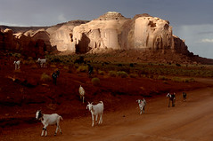 Monument Valley (philippe*) Tags: usa southwest utah goats monumentvalley