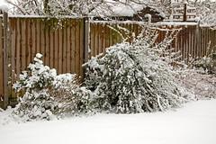 Snow Feb 07 021