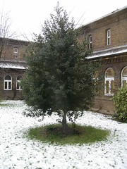 Snowfall 04