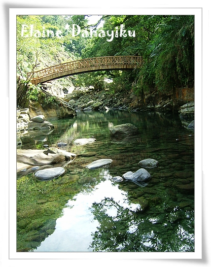 賞魚區的木橋