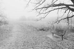 Their Shrine--Owen Park (Mingfong) Tags: park blackandwhite bw white snow monochrome wisconsin shrine snowy story madison albumcover owen stories owenpark   mingfong musicflyer  mingfongjan  artbrochure  sketchoflight mingfongphotography