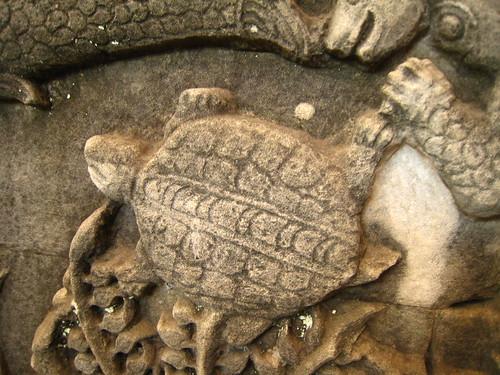 還有烏龜喔。