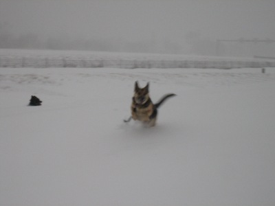 So Happy to jump in snow