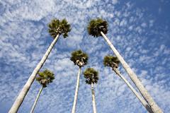 birthday palms