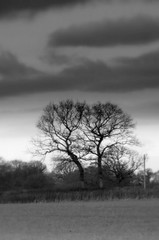 (andrewlee1967) Tags: uk trees england blackandwhite bw monochrome landscape mono countryside cheshire orton helluva andrewlee andrewlee1967 superbmasterpiece 5bangs andylee1967 focusman5