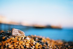 i hate myspace (lomokev) Tags: beach stone canon 50mm brighton dof random stones low myspace depthoffield hate agfa ultra address rant agfaultra eos1 rate ratseyeview  gorund deletetag canoneos1 myspaceaddress file:name=eos10806d68