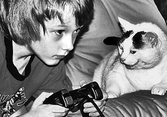 boy, game, cat