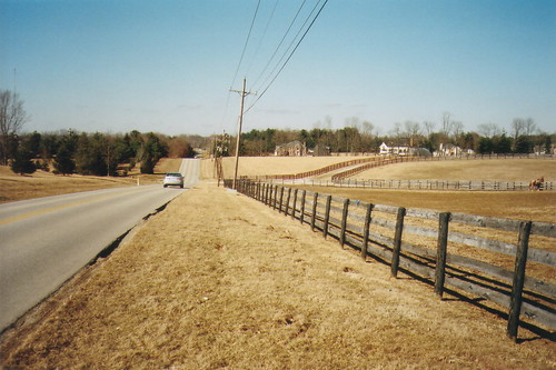 Fences, horses, road