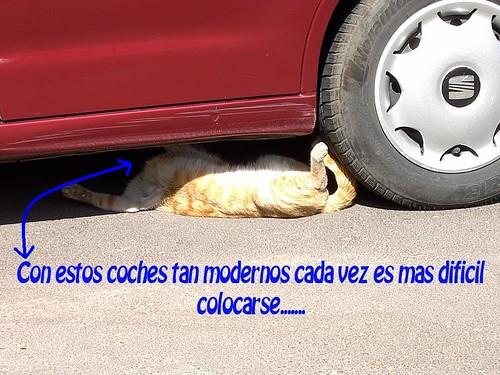 gato coche