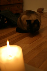 IMG_4486 (rwike77) Tags: cats candle curie digitalrebelxti