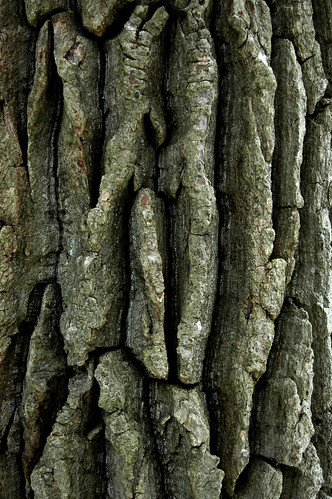 Texture-Rrific Tree   Bark