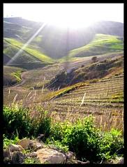 R a y . (Valentina Saluto) Tags: sun verde green nature landscape nikon ray natura sicily sole terra sicilia paesaggio valentina raggio naturalmente nikoncoolpixl2 nikonl2coolpix valentinasaluto