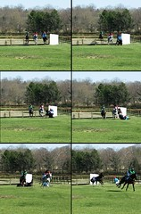 | \ > _ _ | (Pedal Faster) Tags: deleteme5 deleteme8 horse deleteme2 deleteme3 deleteme4 deleteme6 deleteme9 deleteme7 race saveme crash saveme2 deleteme10 steeplechase