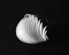 Onion (efo) Tags: stilllife vegetable apx100 onion onblack om4