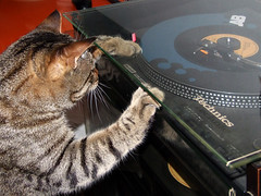 Gatto Mimmo scratching deejay (Gatto Mimmo) Tags: cats cat disco dj tabby technics stereo gato scratch deejay gatto mimmo hihi gattomimmo bestofcats