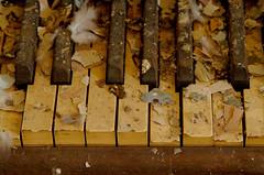 Piano Keys (Little Alien is in) Tags: keys buffalo theatre piano urbex sattler galleryselects