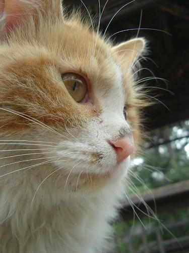 樱桃沟·猫