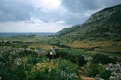 Riding through the fields of Levanzo Island (www.martin-liebermann.de (zeitspuren)) Tags: donkey sicily sicilia esel sizilien isoleegadi egadiislands gadischeinseln 0203274030 copyrightbymliebermannzeitspuren