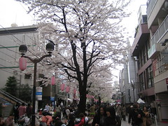 Jiyugaoka Shopping Street with Sakura