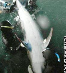 Delfin atávico