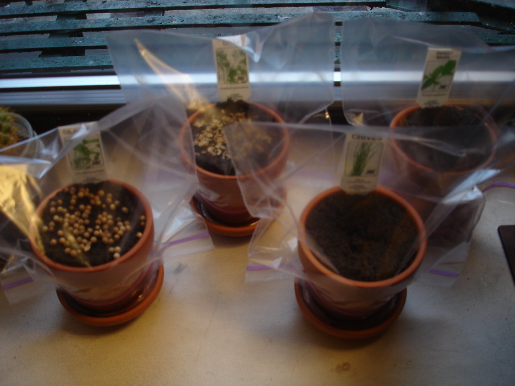 herb garden: day 1