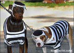 Doggie Prisoners