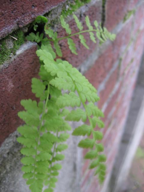 fern, ankeny park