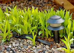 "In The Garden (Robin ""Evil Bob"" A) Tags: light plant green nature rock d50 garden geotagged nikon rocks dof pennsylvania pebbles pa pebble vegetation nikkorafsdxvr18200mm3556gifed"