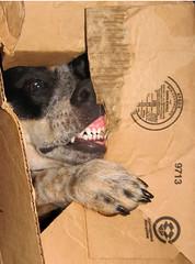 crazed box killing frenzy - by bermudi