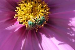 Green Bee N