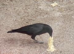 2007 04-19 spagetti crow:scroll down story. - by yeimaya