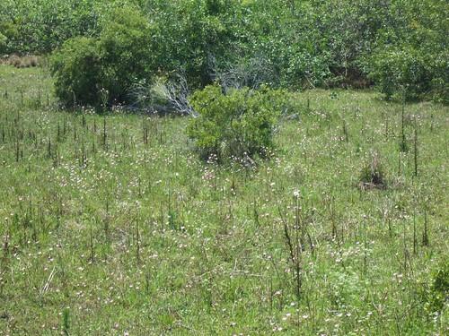 Everglades Study 257