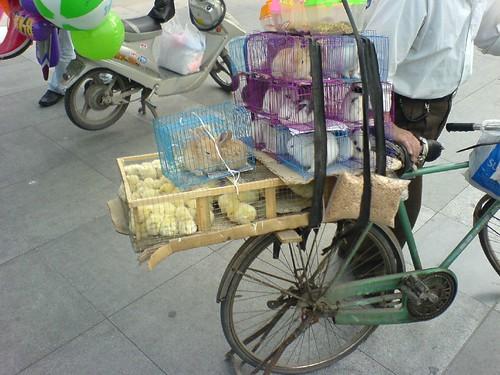 中山公园外出售宠物